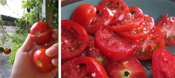 apt-tomato-harvest.jpg